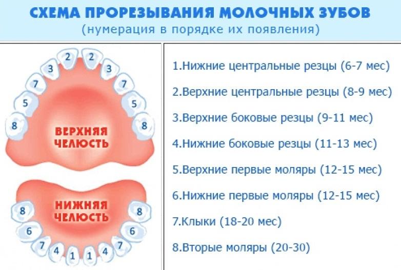 Когда прорезываются зубы после температуры